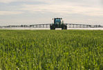 spraying wheat with fungicide, near Cypress River, Manitoba, Canada