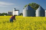 canola field, grain bins and elevator, Dugald, Manitoba, Canada