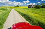 a truck on a country road with old barn and canola fields in the background, near Somerset, Manitoba, Canada
