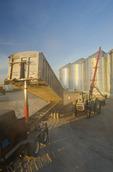 a farmer unloads a grain truck loaded with wheat into a grain storage bin during the harvest, near Lorette,  Manitoba, Canada