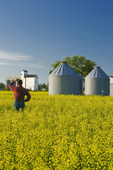 a man looks out over a canola field, grain bins and elevator, Dugald, Manitoba, Canada