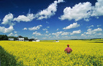 man in bloom stage canola field with farmyard in background , Tiger Hills,  Manitoba, Canada
