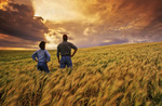 a farmer and his wife look out over a maturing barley crop and sky filled with storm clouds, Tiger Hills, Manitoba