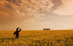 a farmer looks out over a maturing spring wheat crop at sunset/grain storage bins in the background, near Carey, Manitoba, Canada