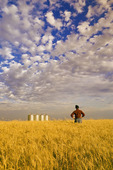 a man looks out over a mature winter wheat crop, grain storage bins in the background, near Carey, Manitoba, Canada
