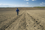 a farmer scouts a newly seeded sunflower field, Tiger Hills, Manitoba, Canada