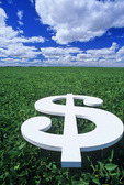 dollar sign/ soybean field