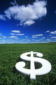dollar sign/soybean field