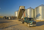 storing oats in a grain storage bin during the harvest, near Lorette,  Manitoba, Canada