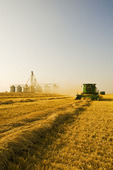 a combine harvests spring wheat, grain handling facility in the background,  near Somerset, Manitoba, Canada