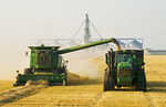 a female combine operator harvests swathed spring wheat while unloading into a grain wagon on the go, near Somerset, Manitoba, Canada