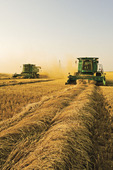 spring wheat harvest, near Somerset, Manitoba, Canada