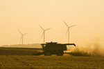 a combine harvests wheat,  wind turbines are in the background, near St. Leon, Manitoba, Canada