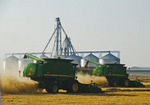 combines harvest spring wheat, grain handling facility in the background,  near Somerset, Manitoba, Canada