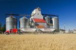 a truck hauling grain passes a grain elevator and mature wheat field, Cypress River, Manitoba, Canada