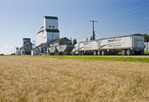 trucks hauling grain line up at a grain elevator in front of a mature wheat field, Cypress River, Manitoba, Canada