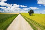 gravel road through farmland, Tiger Hills, Manitoba, Canada