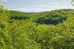 spring foliage in the Pembina Valley, Manitoba, Canada