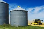 old grain bins/spring wheat harvest, near Somerset, Manitoba, Canada
