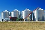 storing canola in a grain storage bin, near Holland,  Manitoba, Canada