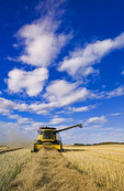 a combine harvester works in a canola field, near Somerset, Manitoba, Canada