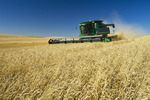 a combine harvests spring wheat near Pangman, Saskatchewan, Canada