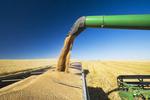 a combine auger empties spring wheat into a farm truck, near Pangman, Saskatchewan, Canada