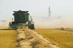 spring wheat harvest, near Somerset, Manitoba, Canada