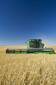 a combine harvests spring wheat near Pangman, Saskatchewan, Canada