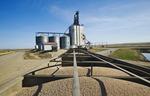 field peas in a farm truck being transported to an inland grain terminal, near Swift Current, Saskatchewan, Canada