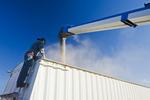 a farmer loads field peas into a farm truck for shipping, near Ponteix, Saskatchewan, Canada