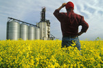 man in canola field with inland grain terminal in the background, near Winnipeg, Manitoba, Canada