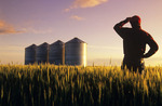 a farmer looks out over his spring wheat crop at sunset, with grain storage bins in the background, near Carey, Manitoba, Canada