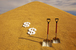 newly harvested stockpiled barley with dollar signs and shovel