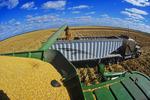 a combine unloads feed corn into a grain wagon
