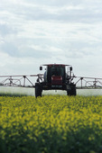 chemical application of fungicide on canola, near Oakbank,, Manitoba, Canada