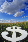 dollar sign in a feed corn field, themes on profits in agriculture, near Roland, Manitoba, Canada
