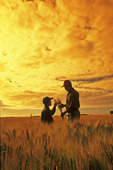 father and son examine maturing barley crop and sky with clouds, near Lorette, Manitoba, Canada