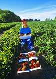 a girl holds a box of strawberries in a strawberry field , near Winnipeg, Manitoba, Canada