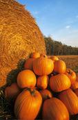 pumpkins next to wheat strw roll, near Glass, Manitoba, Canada