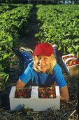 a girl infront of a box of strawberries in a strawberry field , near Winnipeg, Manitoba, Canada