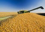 a combine unloads feed corn into a grain wagon on the go, near Niverville, Manitoba, Canada