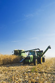 a combine empties into a grain wagon on the go during the feed corn harvest, near Niverville, Manitoba, Canada