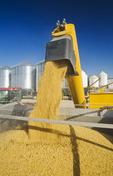 a grain wagon unloads soybeans into a farm truck during the harvest, near Lorette, Manitoba, Canada