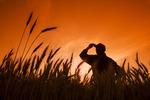 a farmer in a mature winter wheat field,  Manitoba, Canada