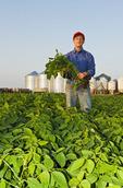 an older man in a soybean field, grain bins(silos) in the background,  Lorette, Manitoba, Canada
