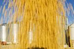 motion study of loading soybeans from grain storage bins, near Lorette,  Manitoba, Canada