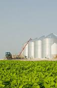 mid growth soybean field, unloading wheat into grain bins(silos) in the background,  Lorette, Manitoba, Canada
