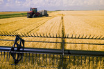 a a combine header cuts wheat during the spring wheat harvest, near Lorette, Manitoba, Canada