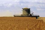 soybean harvest,